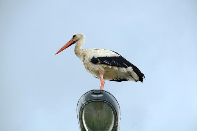 stork-889960_1280