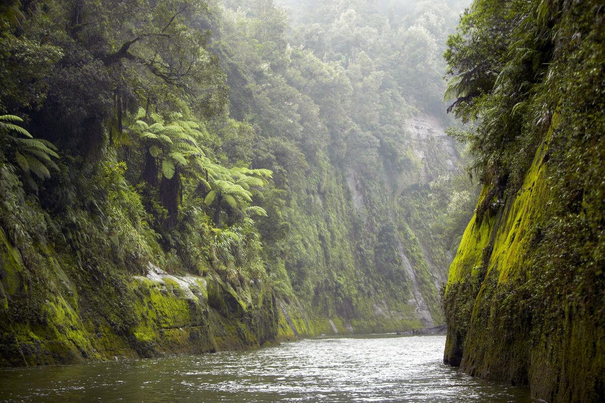 Whanaganui-River-lush-and-green-1