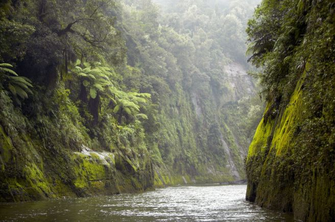 Whanaganui-River-lush-and-green-1