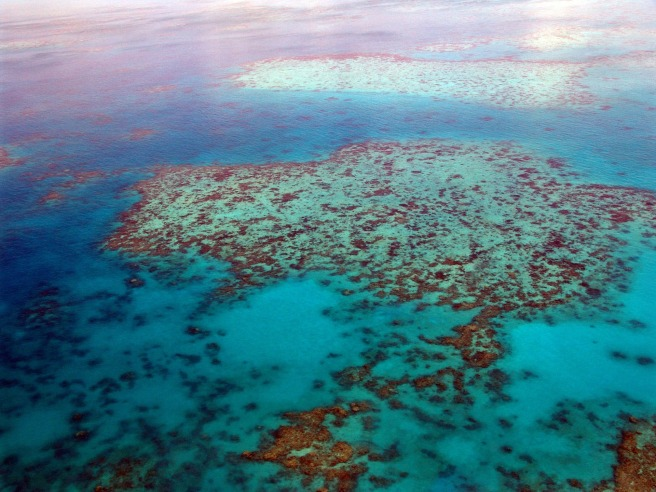 great-barrier-reef-261720_1920