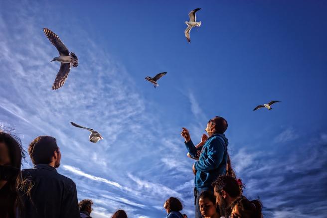 seagulls-5473897_1920